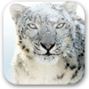 Mac OS X Snow Leopard Wallpapers